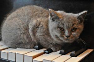 Партитури,програми,сайтове,в които да предложиш музиката си