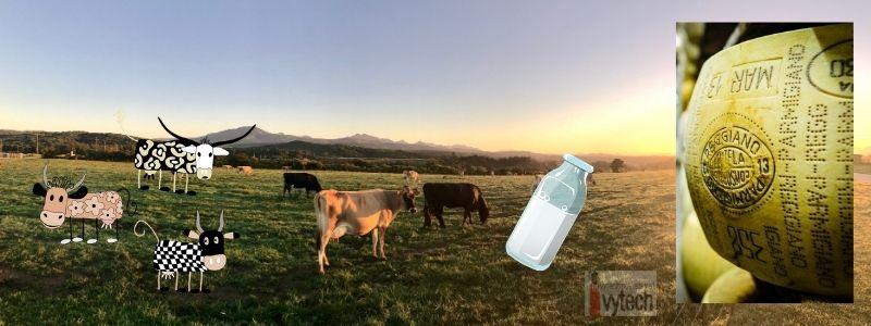 Репортаж от една кравеферма
